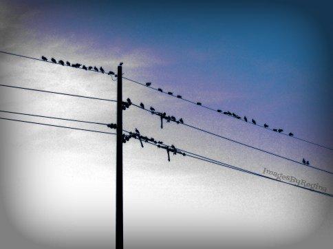 12.01.12.birds