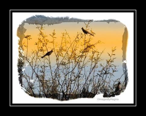 01.25.13.birds