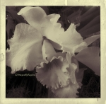 03.03.13.orchid