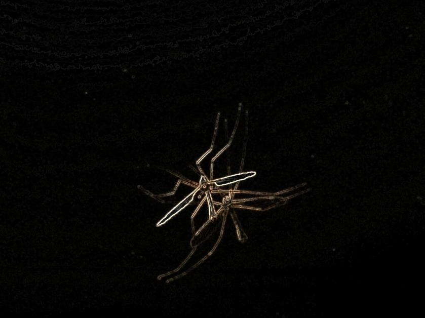 03.21.13.mosquitoeater