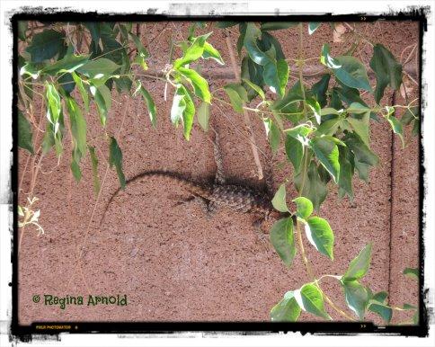 06.18.13.lizard.jpg