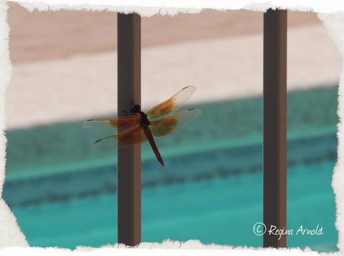 06.21.13.dragonfly.jpg