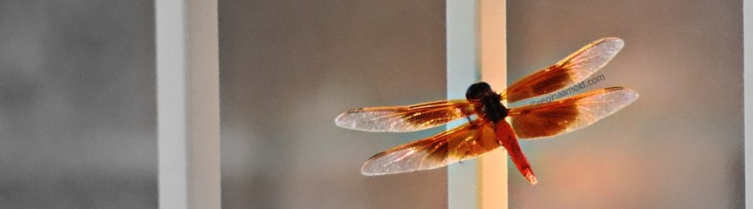 cropped-06-15-13-dragonfly.jpg