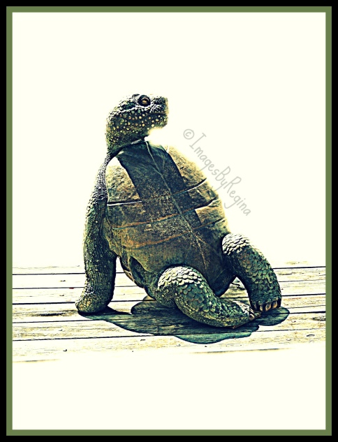 turtle.whitebkgrd.signed
