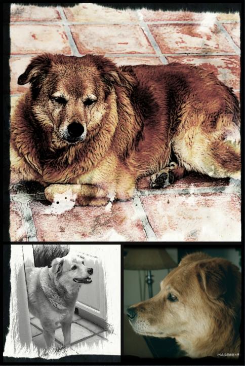 Foxy tribute collage
