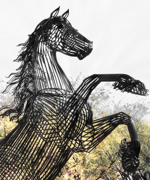 Horse.best.12.23.13