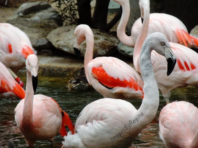 Flamingos.signed