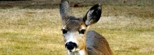 02.07.15.Deer
