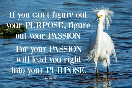 purpose passion